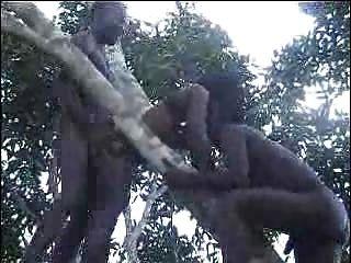 真正的非洲業餘他媽的樹第2部分