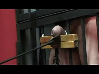 嚴重的公雞和球酷刑